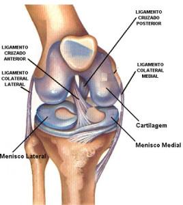 Ligamentos de rodilla
